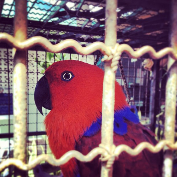 真っ赤な鳥