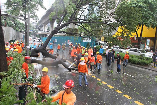 落雷で木が倒れたプルンチット付近
