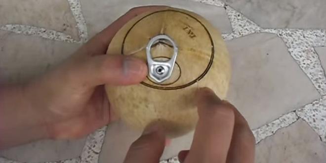 缶ジュースのようなココナッツの実