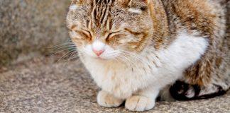 バンコクでまったりできるセンスある猫カフェ3選