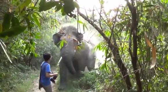野生の象が急に猛突進!