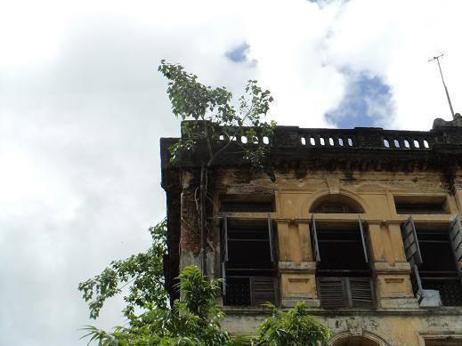 建物から木がにょき