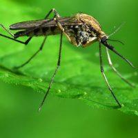 タイのデング熱感染率2014と防止策