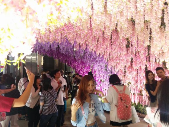 藤の花と女の子