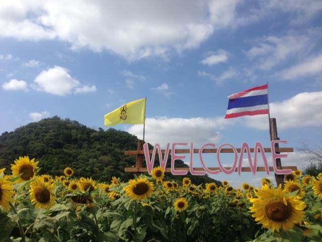 タイ最大の生産地!ロッブリー県...