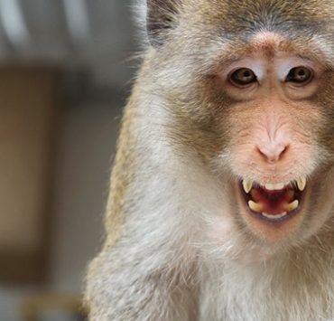 タイの田舎にいる猿