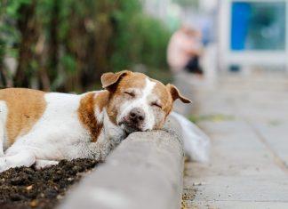 平和な野良犬