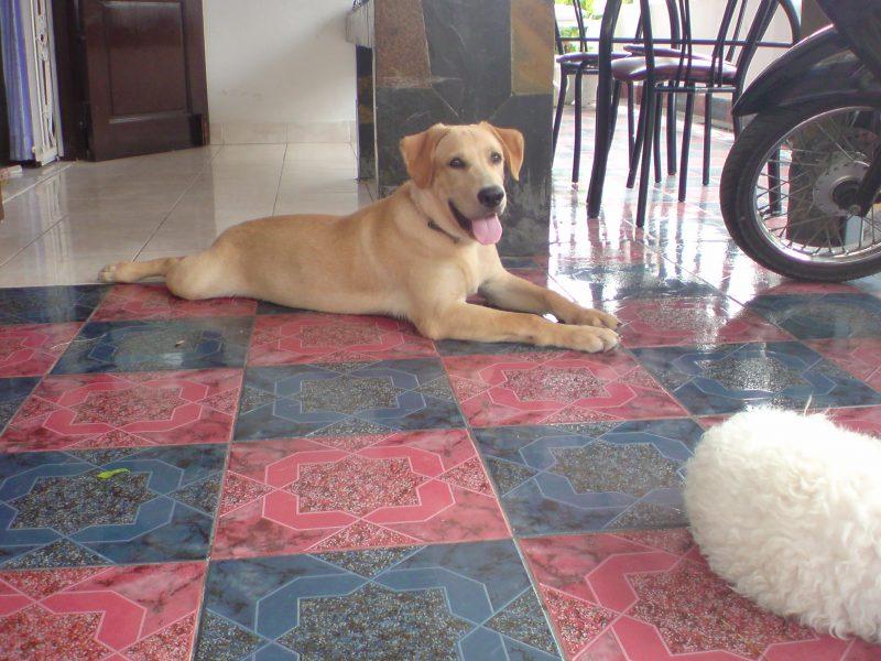 当時の愛犬 SHOUYU