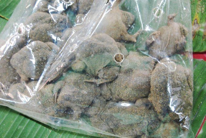 ラムプーン県の市場で販売される「アジアジムグリガエル」