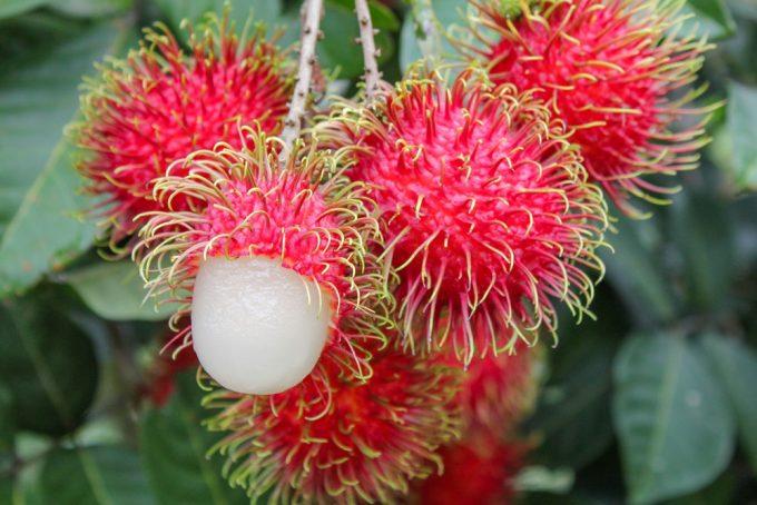 生の果物輸出量第4位のランブータン ©Thai Health Promotion Organization