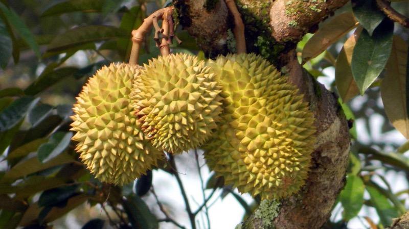 タイで人気のフルーツ「ドリアン」