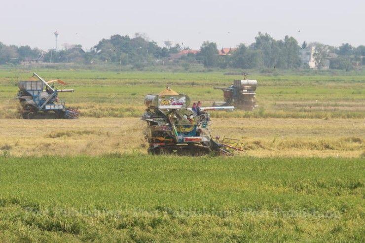 タイの米農家