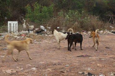タイの狂犬病