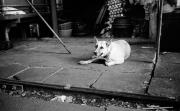 タイの人たちと犬 〜 タイノワンコ その1