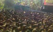 モノスゴイ迫力!バンコク郊外で数千羽のアヒルが大移動