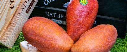 日タイ品種を掛けあわせて30年!5種類の奇跡のマンゴー