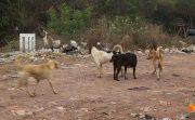 タイ疾病予防局 今年の狂犬病による死亡者数が12名に